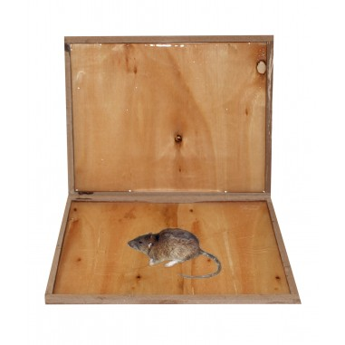 Capcana adeziva gata de utilizare din lemn pentru combatere eficienta sobolani soareci